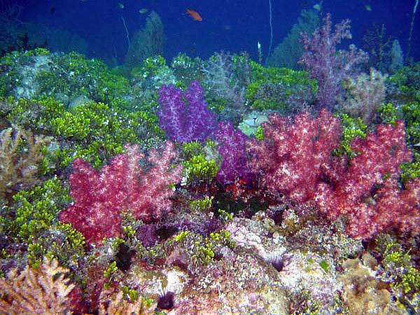 http://www.sub.it/foto_Palau_Island/Barriera_Corallina.jpg